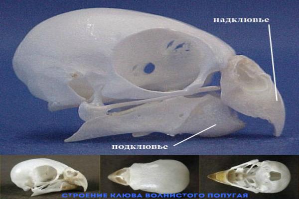 Анатомия головы