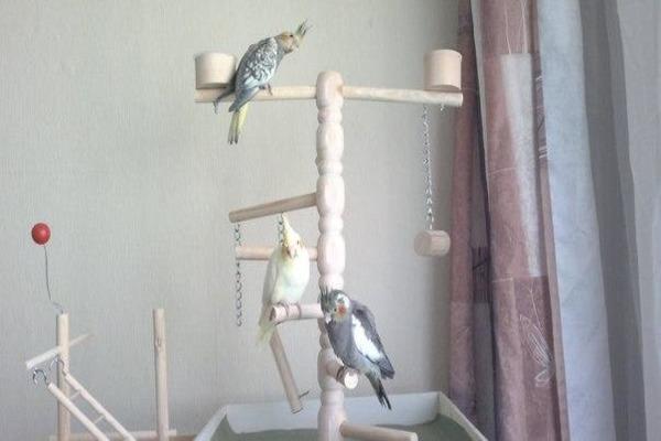 Птиц нужно выпускать из клетки