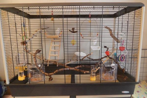Аксессуары в клетке попугая каика