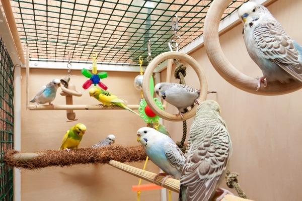 Размещение клетки для попугаев