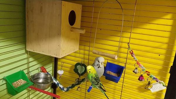 Домик для гнездования попугаев