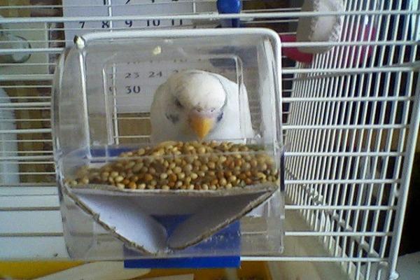 Клрмушка для попугая