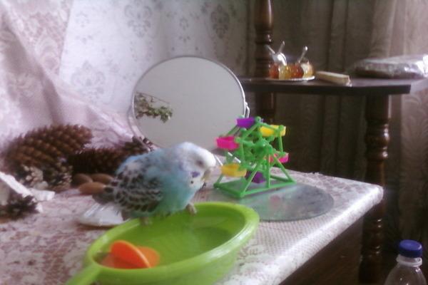 Купалка для птицы