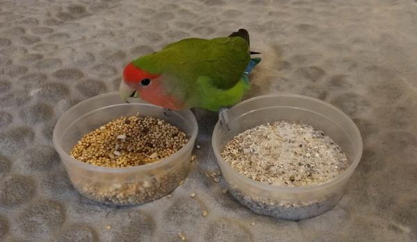 Песок для попугая