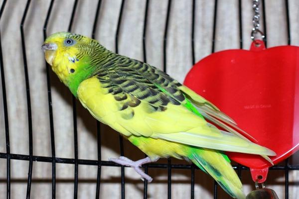 Красивая экзотическая птица