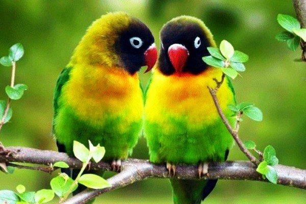 Происхождение попугаев