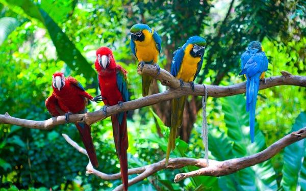 Экзотические птицы в местах обитания