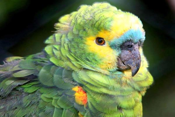 Покупаем экзотическую птицу