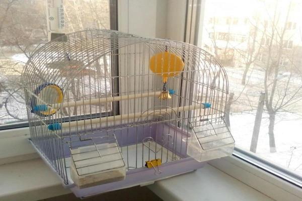 Солнечные лучи для попугаев