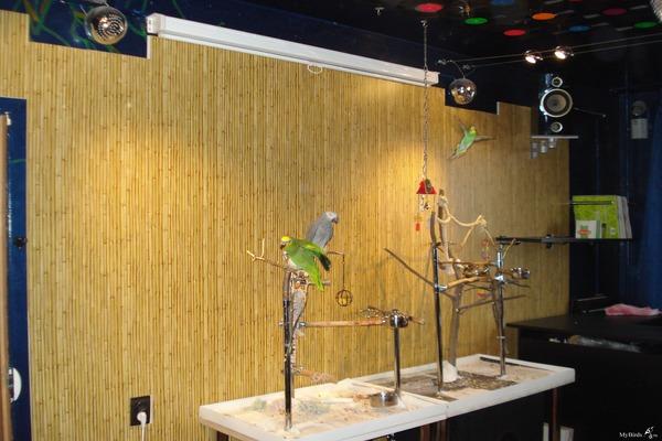 Осветительные приборы для птичек