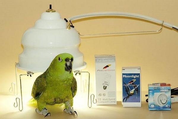 Требования к лампам для попугаев