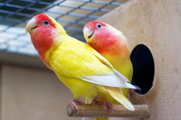 От чего зависит долголетие попугаев