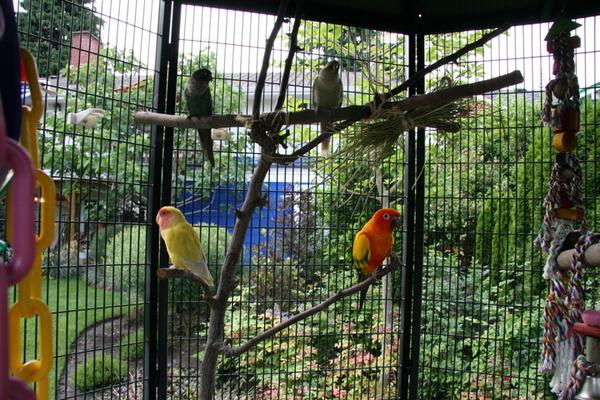 Просторная клетка для попугаев