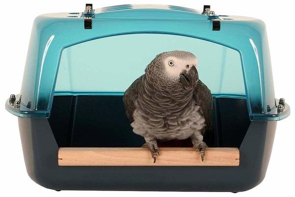 Купалка должна соответствовать размеру попугая