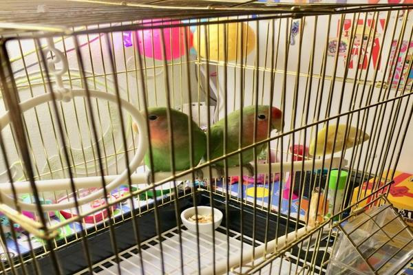 Устройство клетки для попугаев