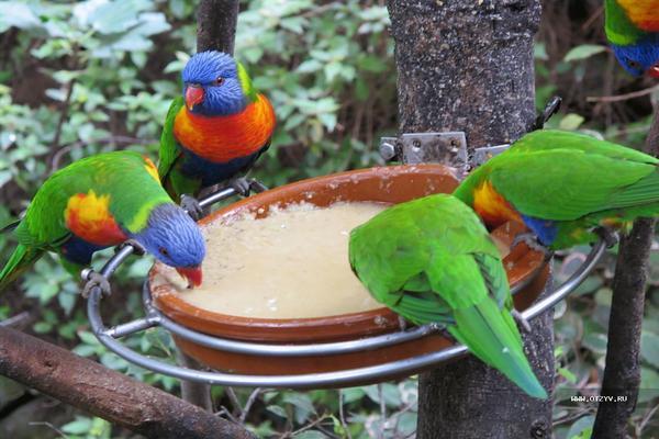 При выборе попугая нужно смотреть на состояние перьев