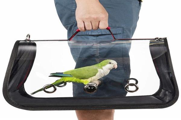 Адаптация попугая перед транспортировкой