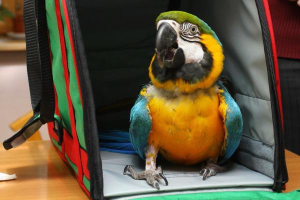 Эта переноска защитит птицу от сквозняка