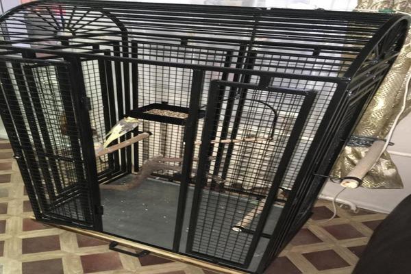 Большая клетка для горного попугая