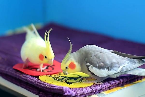 Птицам нельзя давать человеческую еду