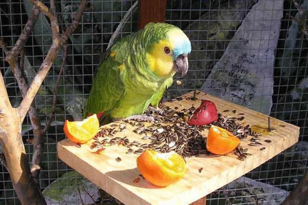 Попугаи не всегда хотят кушать фрукты
