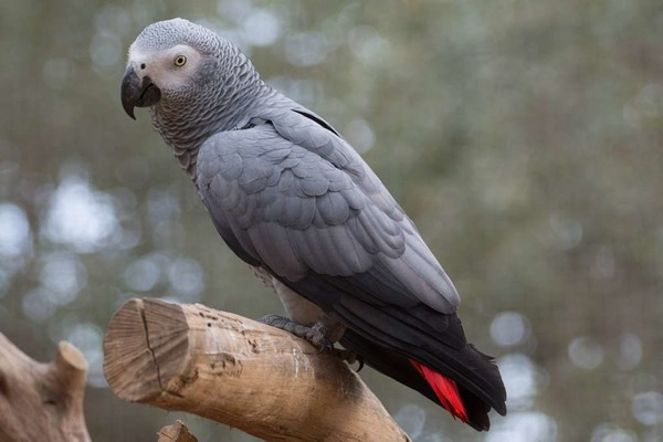 Попугай в своей естественной среде