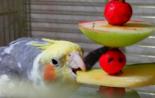 Корелла кушает фрукты