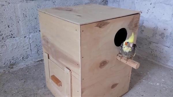 Гнездо для кореллы