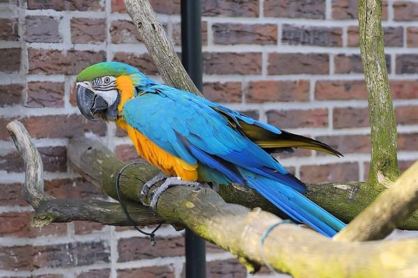 Крупные экзотические птицы