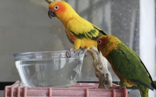 Воода для питья попугаев