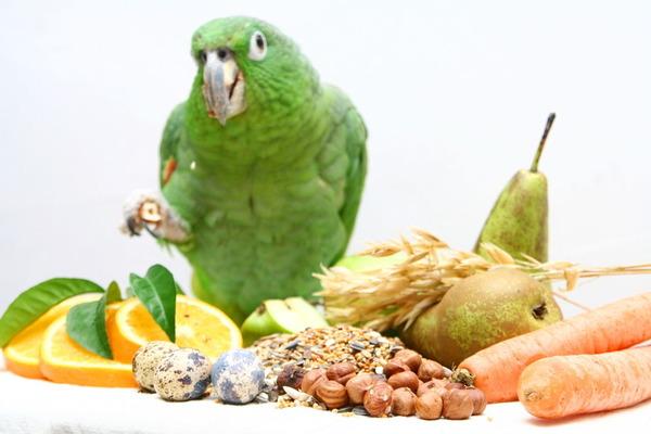 Яйцо в рационе попугая