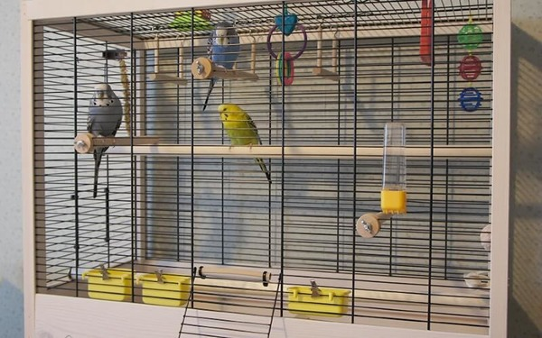 Размеры клетки должны соответствовать количеству попугаев