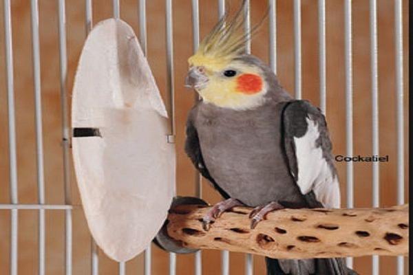 Сепия для попугая