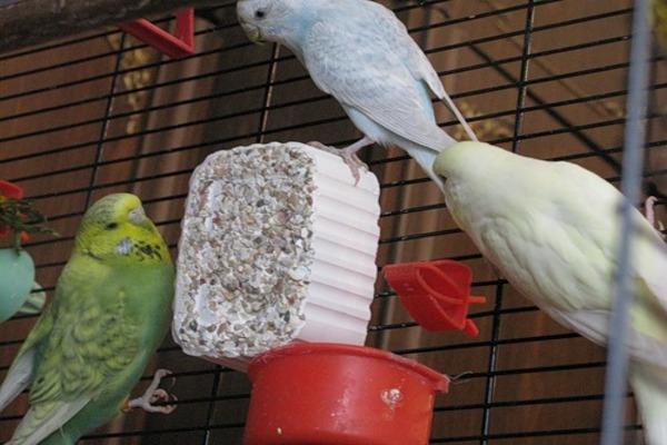 Минеральный камень для попугаев