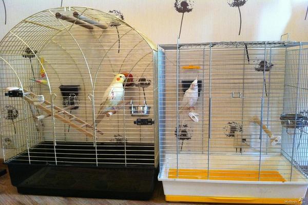 Готовим для попугая клетку