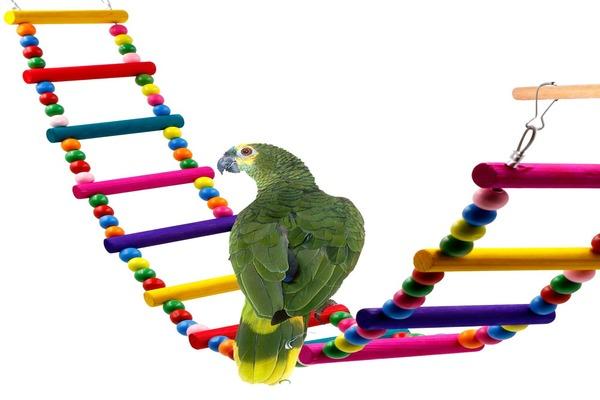 Каруселька для попугая