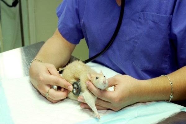 Консультации у ветеринара