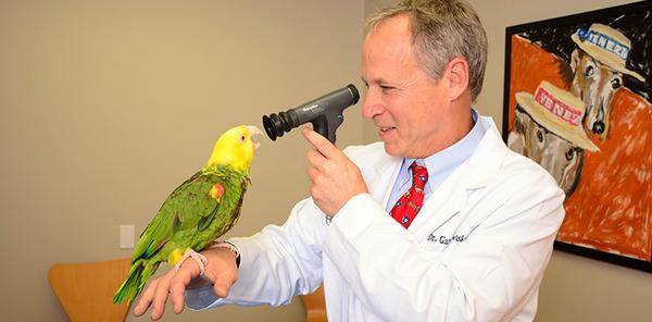 На консультации в орнитолога