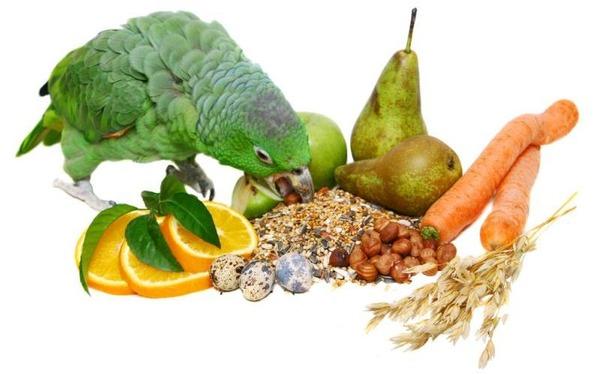 Ассортимент фруктов в рационе пернатого