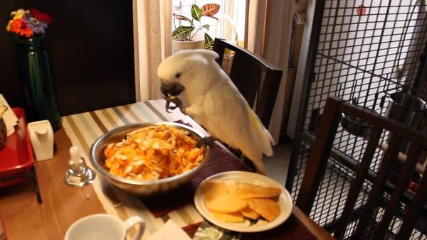 Попугай кушает тыквенные семечки