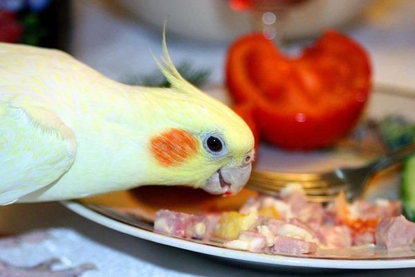 Чем нельзя кормить пернатого