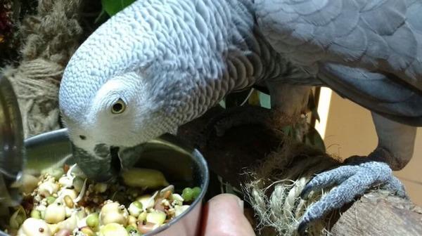 Включаем яйцо в рацион птицы