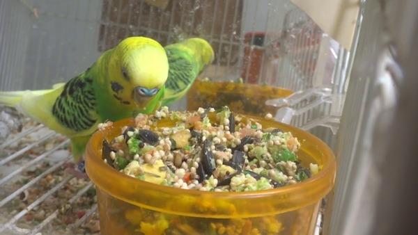 Смесь различных каш для попугаев
