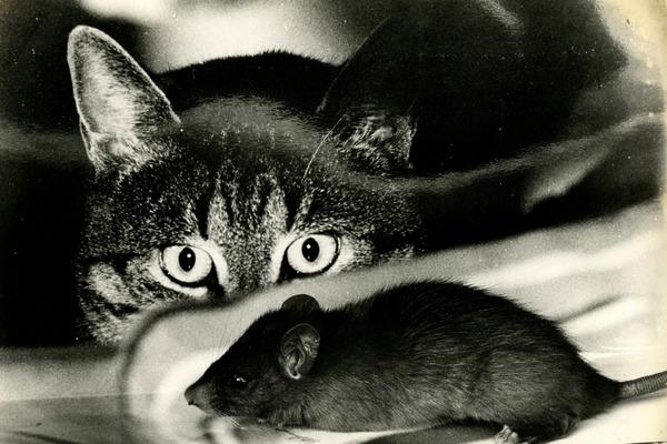 Враги черной крысы